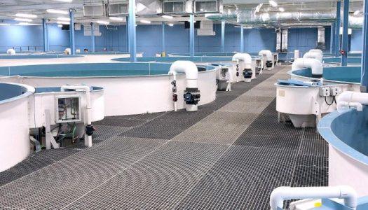 aquaculture 525x300 - Industry Solutions