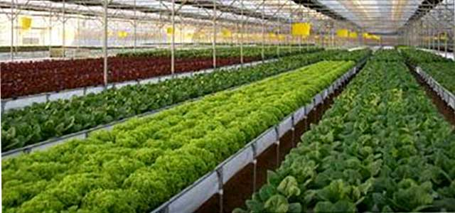 bk hydroponics 1 - Industry Solutions