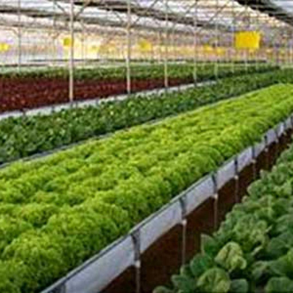 bk hydroponics 1024x1024 - News & Articles
