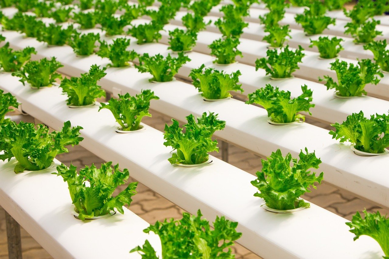 greenhouse 2139526 1280 - Industry Solutions