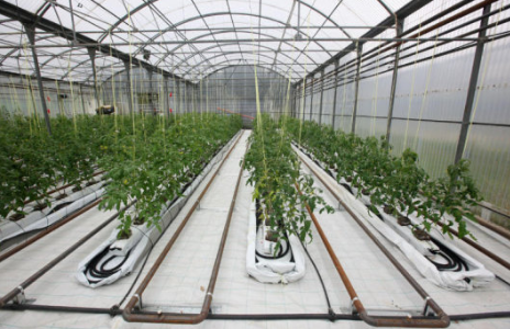 root warming 464x300 - Project Pages - Trident Horticulture
