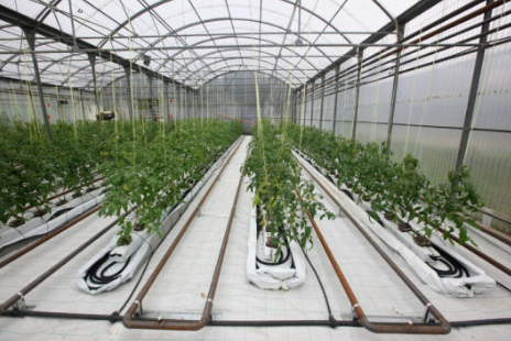 root warming - Industry - Horticulture & Protective Cropping
