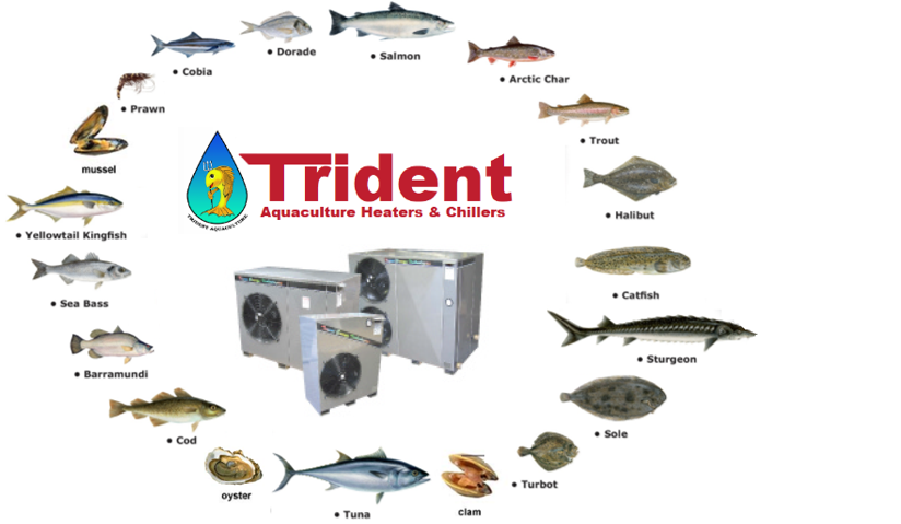 trident fish mix - Farm Fresh Heat Pumps & Chillers