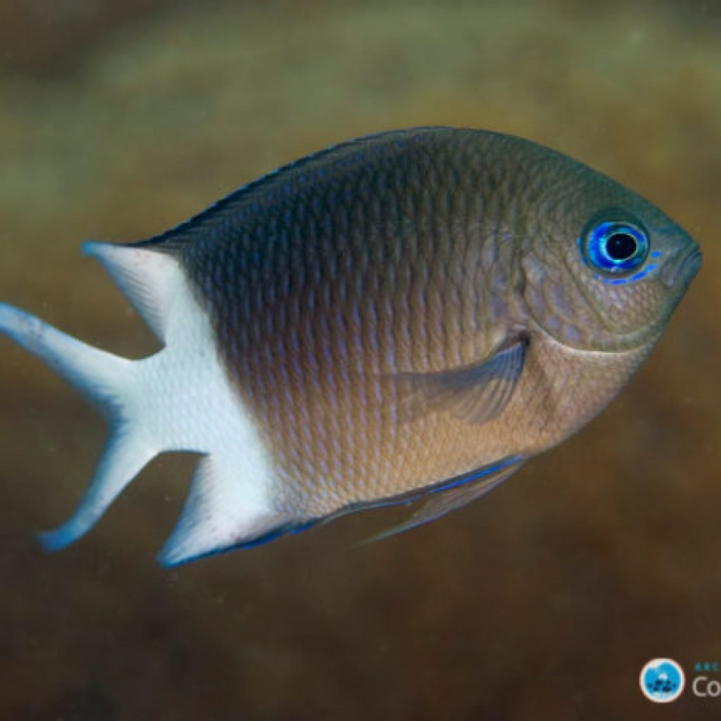 acanthochromis mg 2706 joao krajewski web 700x466 1024x1024 - News & Articles