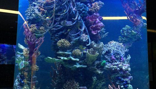 748bab2b 26be 41cc af4a f1206d31f44e original 525x300 - Project Pages - Trident Aquaculture