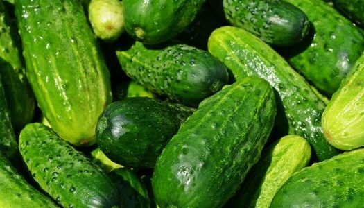 cucumbers 849269 640 525x300 - Project Pages - Trident Horticulture