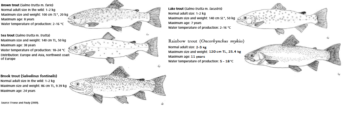 trout - Project Pages - Trident Aquaculture