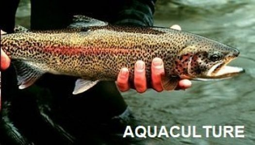 aquaculture 525x300 - Toyesi Home Page