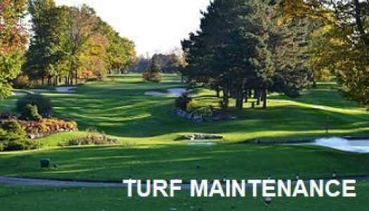 turf maintenance 525x300 - Toyesi Home Page